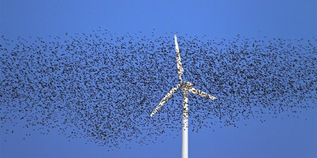 180416-wind-turbines-starling-murmuration-se-1157a_100245e810b879102b572f212aa0047a.focal-1000x500